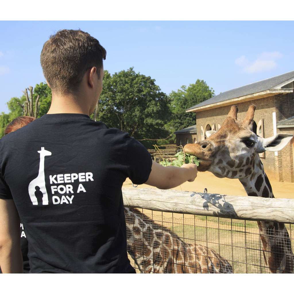 Keeper for a Day Gift Experience, ZSL London Zoo