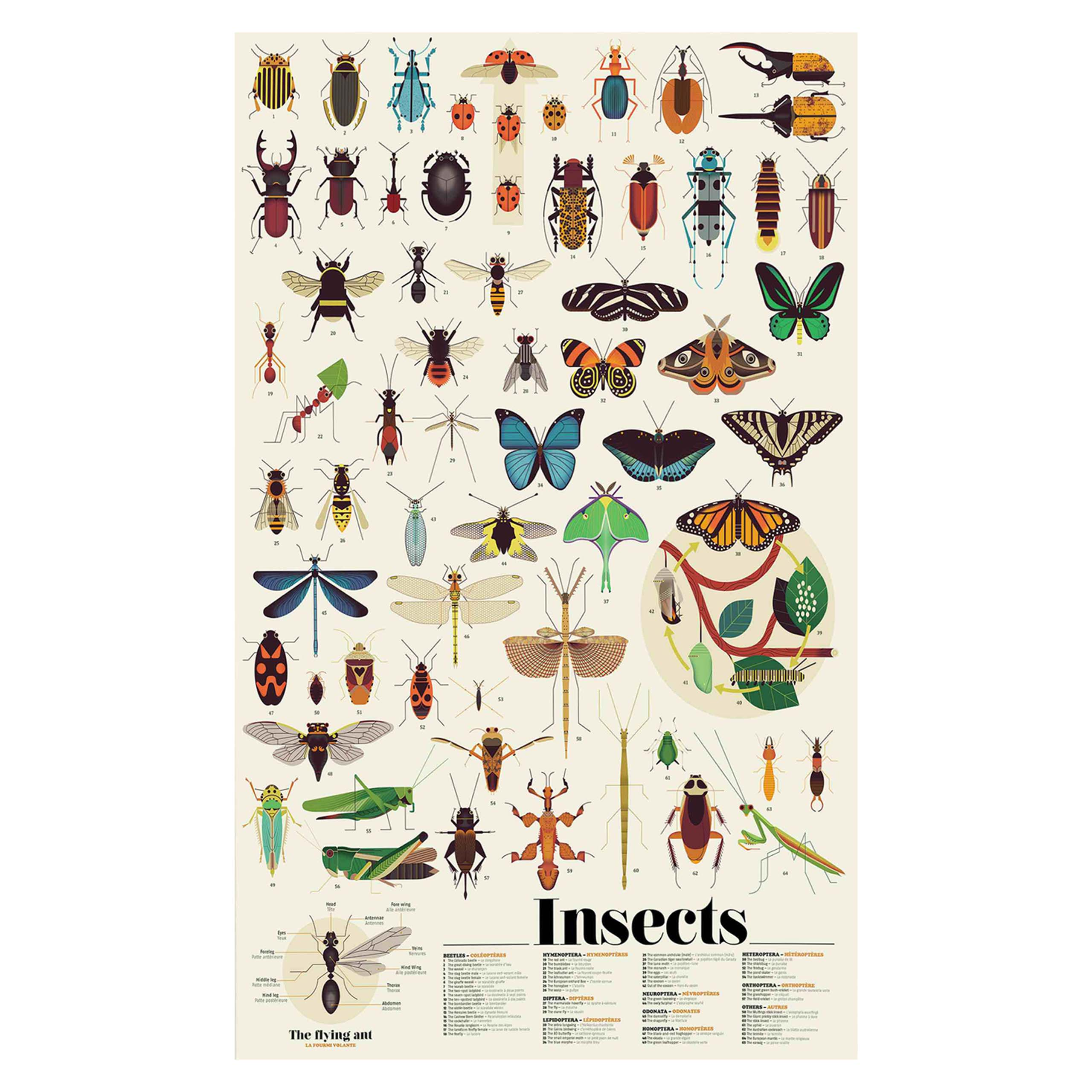Insects Sticker Craft Set, Wall Poster