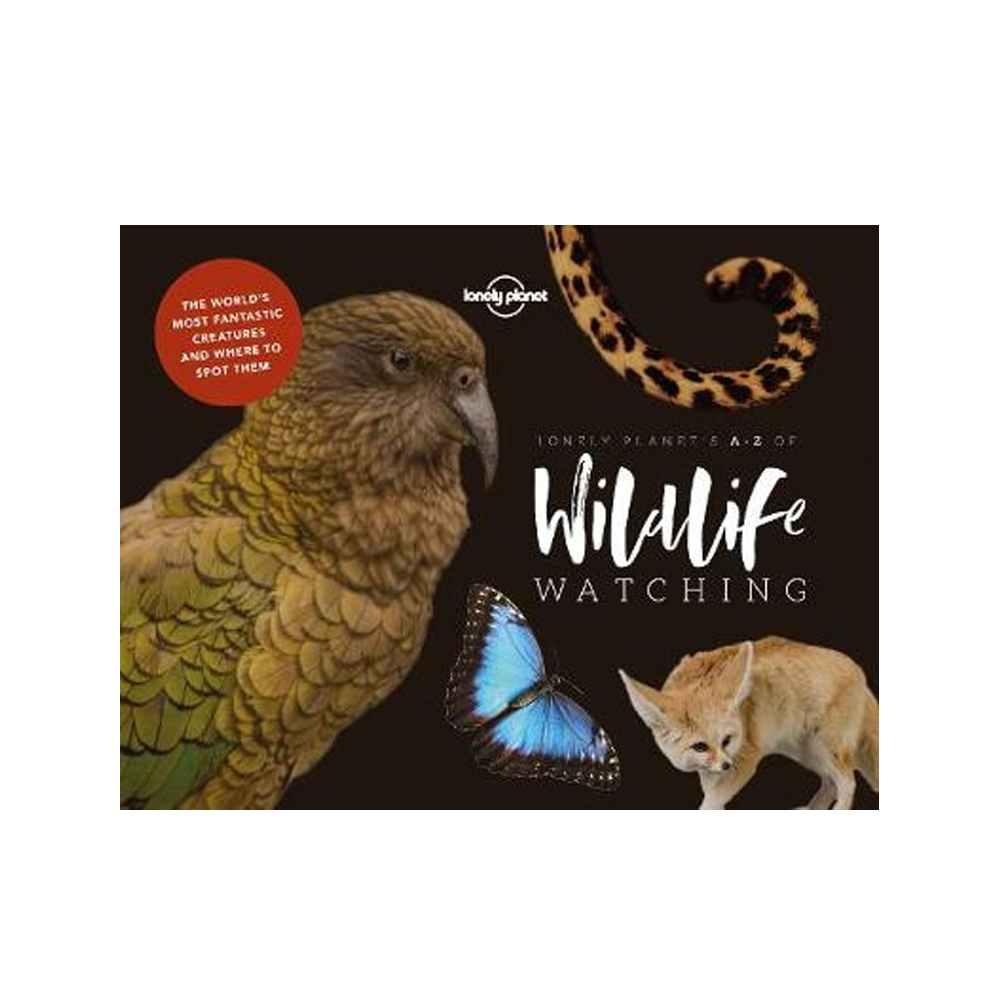 A-Z of Wildlife Watching