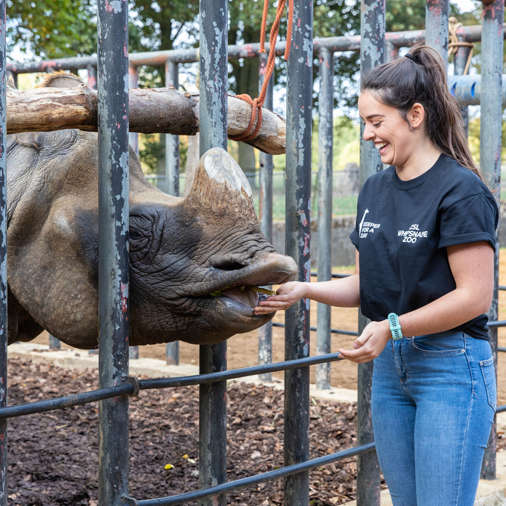 Keeper for a Day Gift Experience, ZSL Whipsnade Zoo Rhino