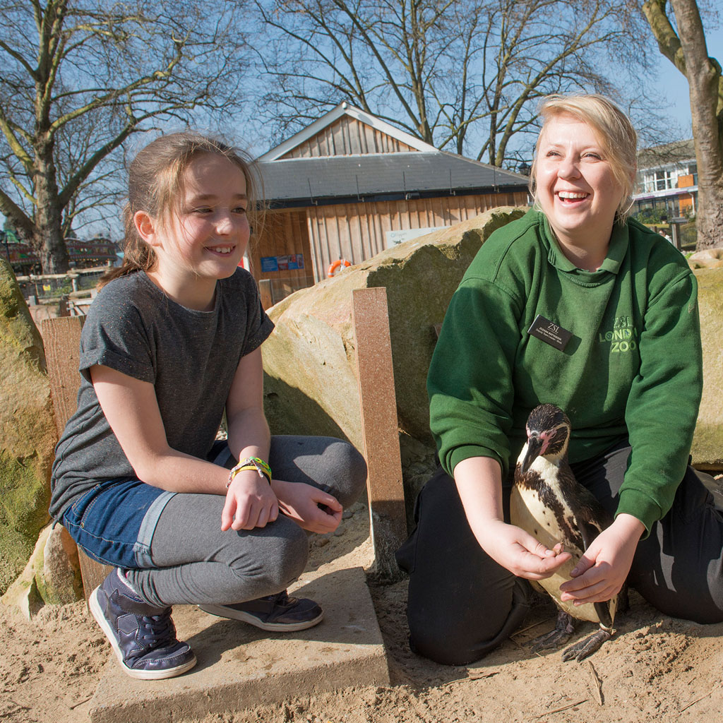 Meet the Penguins Gift Experience at ZSL London Zoo
