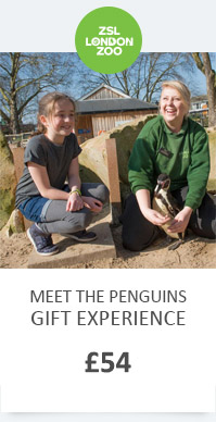 LZ MEET THE PENGUINS