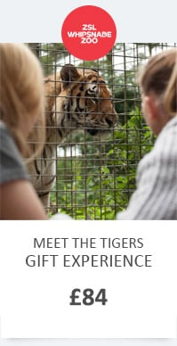WZ MEET THE TIGERS