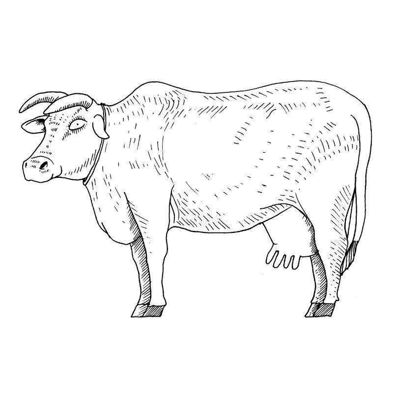 Donation Gift: Cow