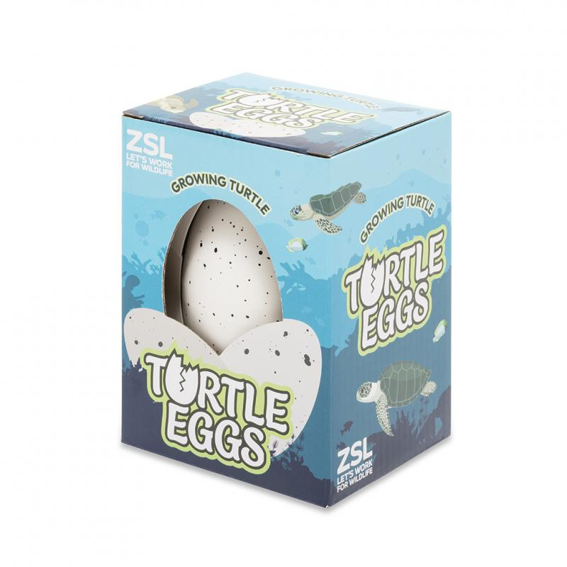 Hatch your own turtle egg