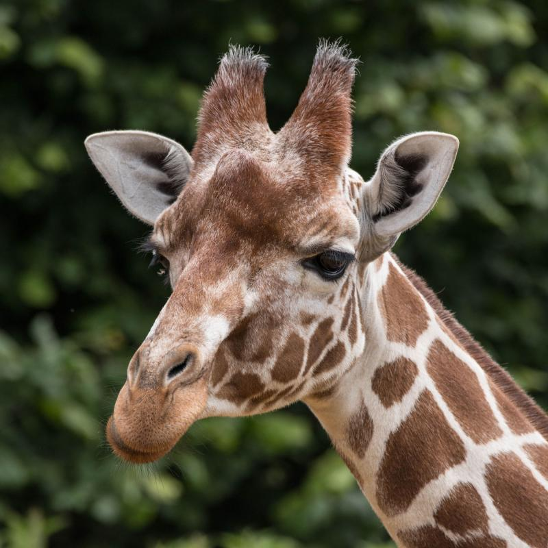 Adopt An Animal Zsl London And Whipsnade Zoo Zsl Shop