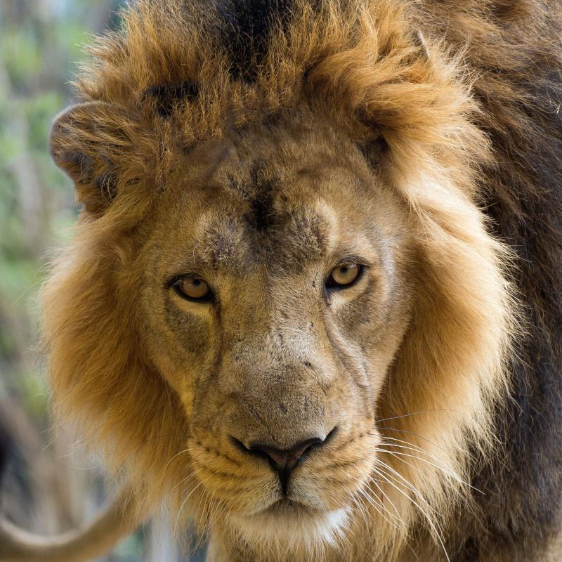 Adopt an Animal | ZSL London and Whipsnade Zoo | ZSL Shop