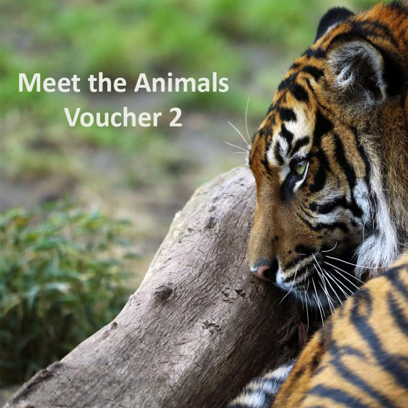 Meet the Animals gift pack 2