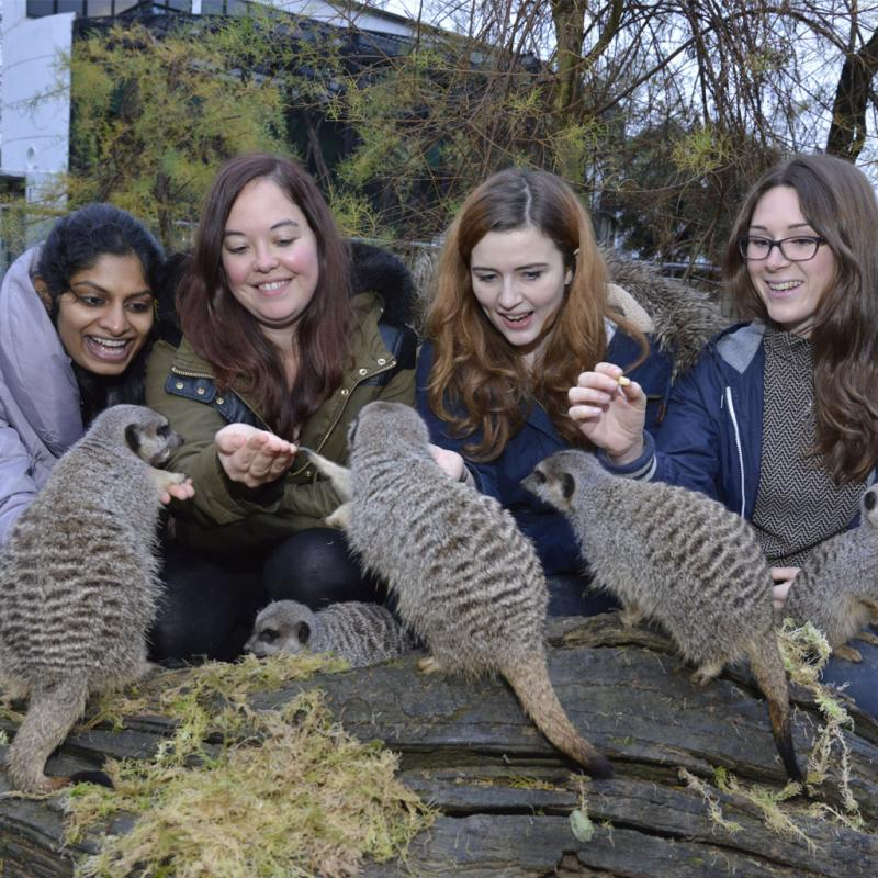 Meet the Meerkats Gift Experience at ZSL London Zoo