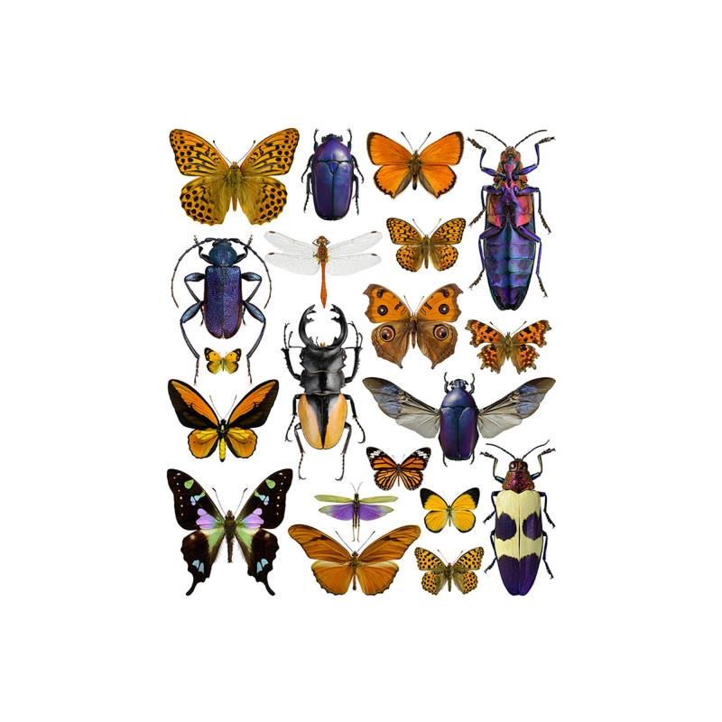 Purple and orange bugs print