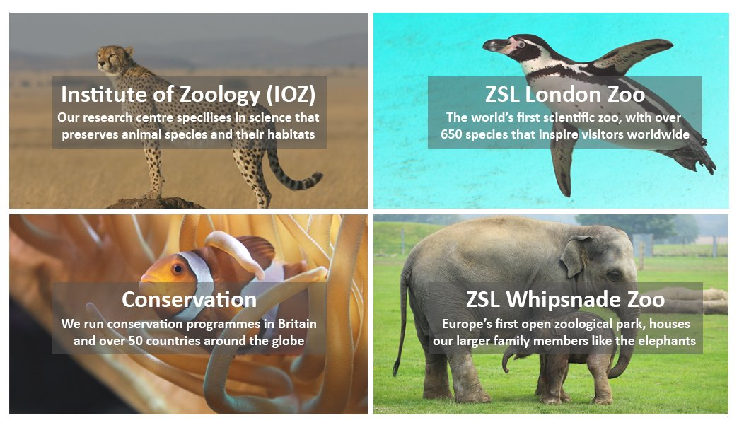 ZSL What we do